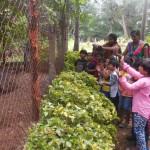 NFCL, Green belt,Kakinada